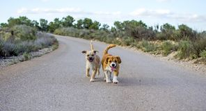 Two small stray dogs lonely on the asphalt road royalty free stock photo