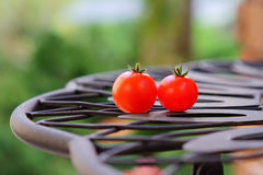 Two small tomato Stock Photography