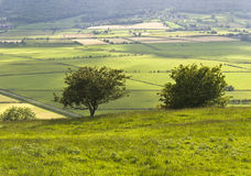Two small trees above the Lyth Valley Royalty Free Stock Photo