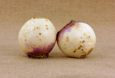 Two small turnips Stock Image