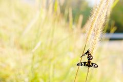 Two small white, yellow and black butterflies sit on a grass flo. Wer amid the bright grass in sunny summer meadow for green nature background or green nature Stock Photos