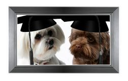 Two smart dogs with graduation cap