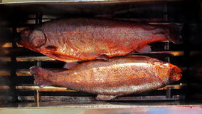 Two smoke-dried delicious fishes. Close up shot of smoke-dried delicious fish in smoker box stock video footage