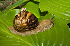 Free Two Snails Stock Photo - 13215400