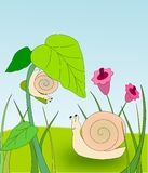 Two Snails. In a flower meadow, one is climbing on a flower Stock Photography