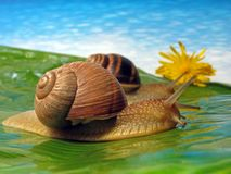 Two snails. On a meadow Stock Image