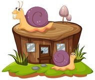 Two snails crawling on the stump tree Stock Photos