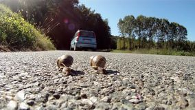 Two snails in danger. Two snails on the road and a car passing stock video