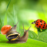 Two snails and ladybug looking at green background Stock Photo