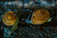 Two Snails at Night - Macro Photography. Bokeh Stock Photo