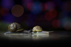 Two snails Stock Photos