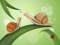 Free Two Snails On The Leaves Royalty Free Stock Photography - 150374887