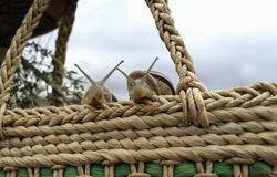 Two snails watching from a wicker basket. royalty free stock images