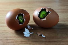 Two snake's head in broken eggs Stock Image