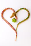 Two snakes and an apple. Two wood snakes drawing a heart and an apple Royalty Free Stock Images