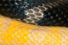 Two snakes skin Royalty Free Stock Images