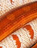 Two snakes skin Royalty Free Stock Photos