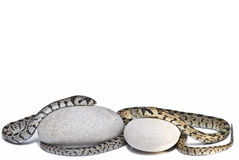 Two snakes on two stones. Royalty Free Stock Image