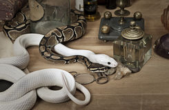 Two snakes with vintage objects Royalty Free Stock Image