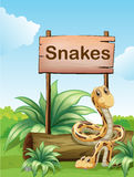 Two snakes beside a wooden signboard Royalty Free Stock Photo