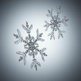 Two snowflakes Stock Photo