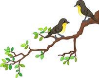 Two song birds cartoon on spring branch Stock Photos