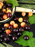 Two sorts of cherry Stock Photography