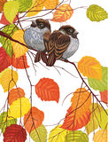 Two sparrows. Two cute sparrows sitting on the branch over white background - vector illustration Stock Photo