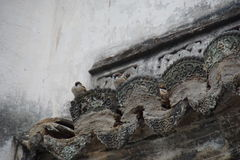 Two Sparrows on an ancient Chinese roof. In a village called Hongcun. The architecture of the building dating back to the Ming and Qing dynasties Stock Photos