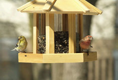 Two sparrows at a feeder Stock Image