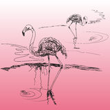 Two species of flamingos standing in water. Two species of flamingos in the style of hand drawn on the pink background Royalty Free Stock Image