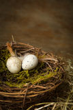Two speckled eggs in nest Royalty Free Stock Photos