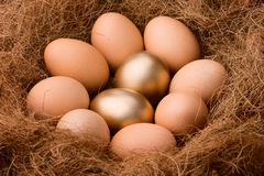 Two spesial ones. Two golden eggs between eight ordinary ones in nest. Just want to bring out the concept of probability 2:8 Stock Images