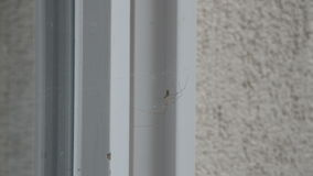 Two Spiders on a Cobweb stock footage