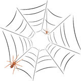 Two spiders on the spiderweb Stock Photos