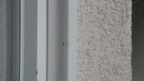 Two Spiders by a Window stock video footage