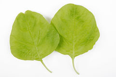 Two spinach leaves Royalty Free Stock Photography