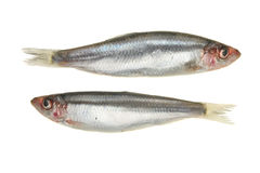 Two Sprats Royalty Free Stock Photos