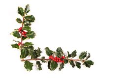 Two sprigs of holly. On the white royalty free stock photo