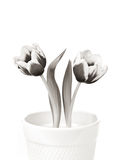 Two Spring Tulips. A black and white toned image of a pair of spring tulip flowers in a white pot isolated on a white background stock photography