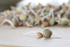 Two Sprouts Stock Image