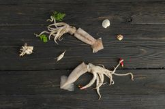 Two squids on a wooden table Royalty Free Stock Photography