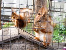 Two squirrel in the cage Stock Photos