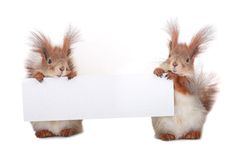 Two  squirrel Royalty Free Stock Images