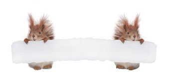 Two  squirrel Royalty Free Stock Photography