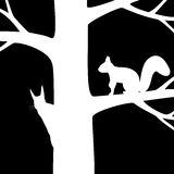 Two squirrel on the tree. Stock Photos