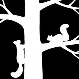 Two squirrel on the tree. Stock Image