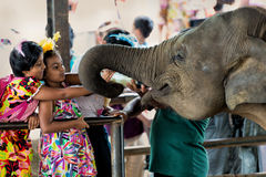 Two Sri Lankan girls feeding a baby elephant Royalty Free Stock Images