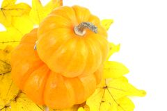 Two stacked mini pumpkins on fall yellow leaves Stock Photography