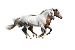 Two stallions Royalty Free Stock Images
